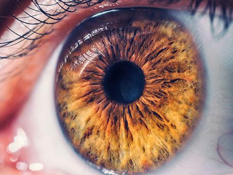 Augenarzt - Netzhaut